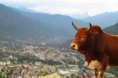 Partez à la découverte du Bhoutan…