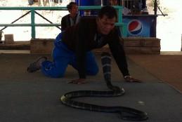 The King Cobra Village Thailand-Ban Khok Sa-nga